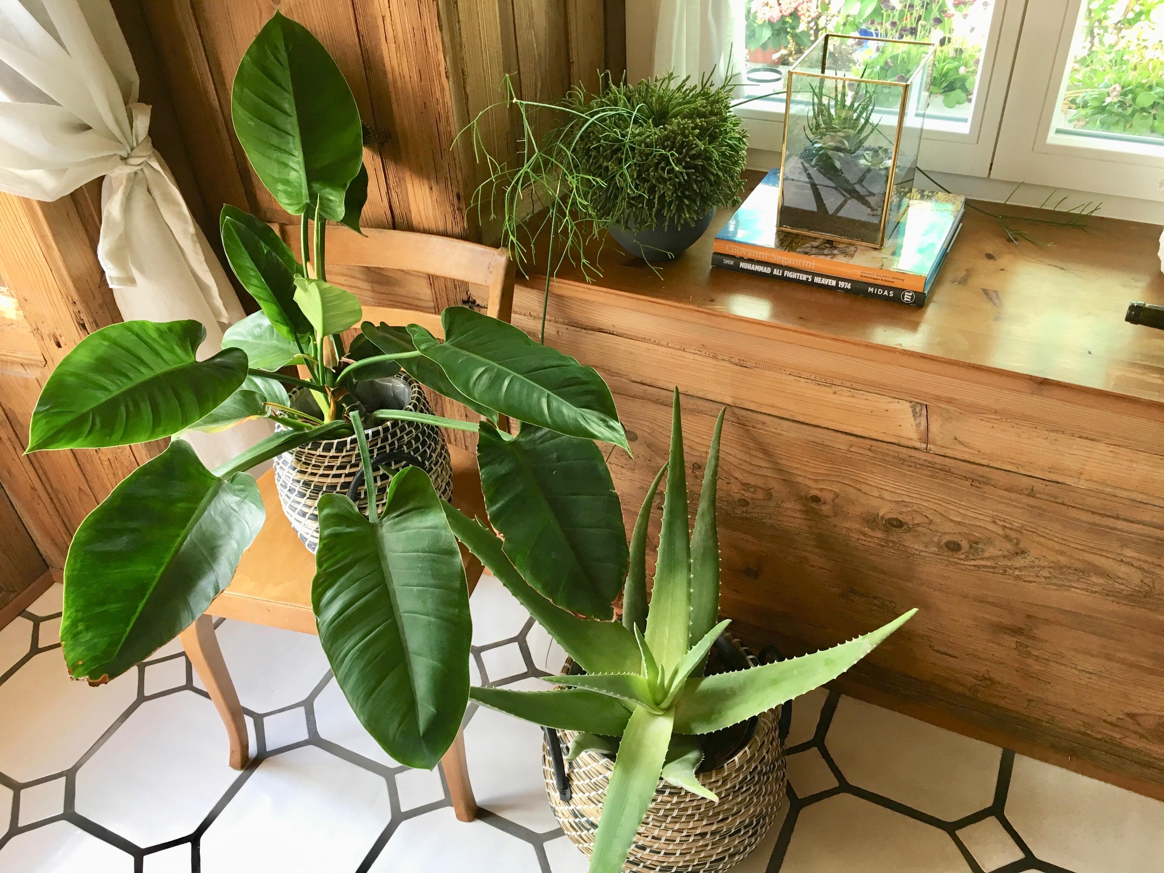 botanic Living